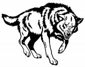 wolf,canis lupus,attacking pose,black and white isolated picture poster