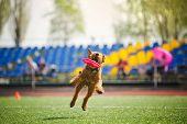 velshterer dog catching the flying disc in jump poster