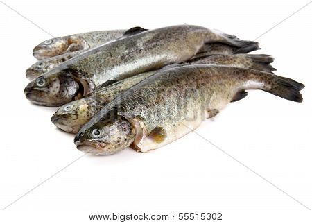 poster of Five fresh rainbow trout on white background isolated