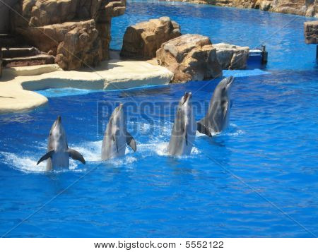 Four Dancing Dolphins In A Row