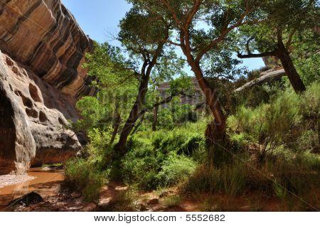 Desert Canyon Oasis