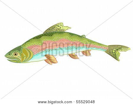 American Rainbow Trout (oncorhynchus Mykiss)