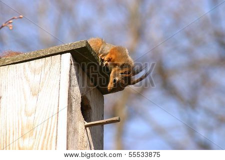 Squirrel and birdhouse on the tree in winter