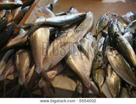 A batch of fish for sale at the markets. poster
