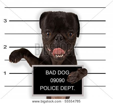 a mugshot of a bad dog poster