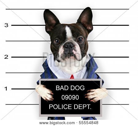 a mugshot of a bad dog
