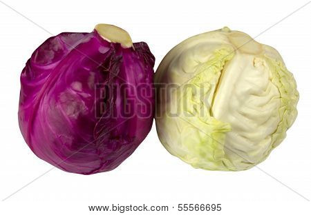 Purple And White Cabbage