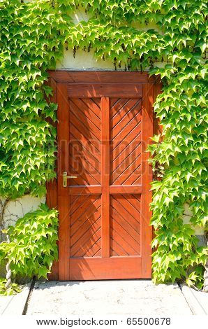 wooden door at home, wrapped in thick greenery