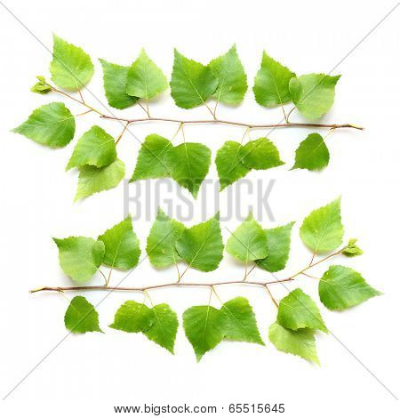 The Silver Birch ( Betula pendula ) is used in the pharmacy and cosmetics industry.