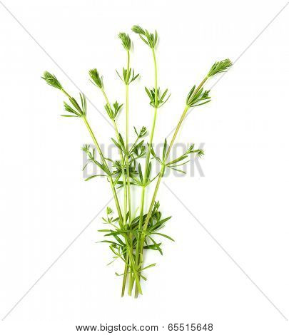 The Cleavers (Galium aparine) have been used in the traditional medicine for treatment of disorders of the diuretic, lymph systems and as a detoxifier.