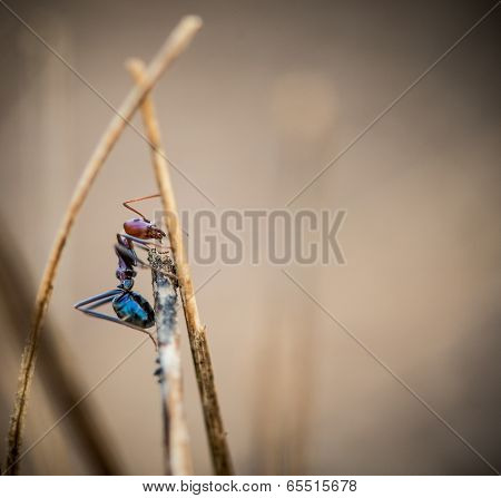 Ant On A Stick