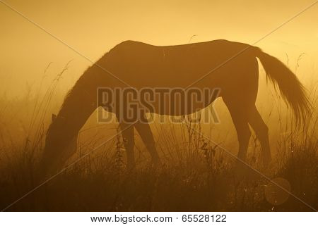 Horse eating grass at dawn on a beautiful gold background