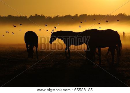 Herd of horses at sunrise over which flies a flock of bird