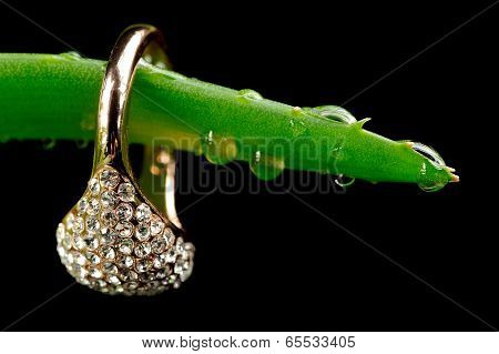 Gold Ring On Aloe Vera Leaf With Water Drops