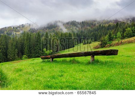 Wooden Bench In Front Of Coniferous Forest
