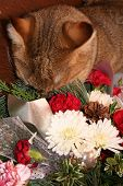 cat with head buried in flower arrangement poster