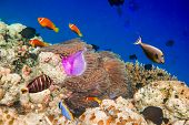 Reef with a variety of hard and soft corals and tropical fish. Maldives Indian Ocean. poster