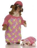 english bulldog mother and daughter wearing matching outfits poster