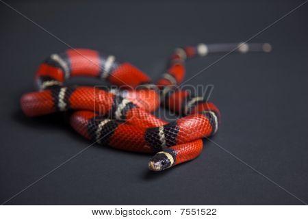 Snake in a studio