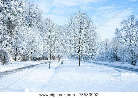 Winter Wonder Land - In The Park