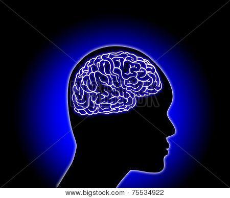 Human Brain - Stock Illustration