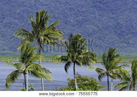 Tropical landscape in Cairns, Queensland, Australia