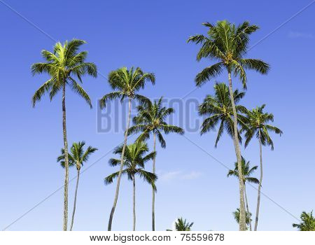 Palm trees on a beautiful day