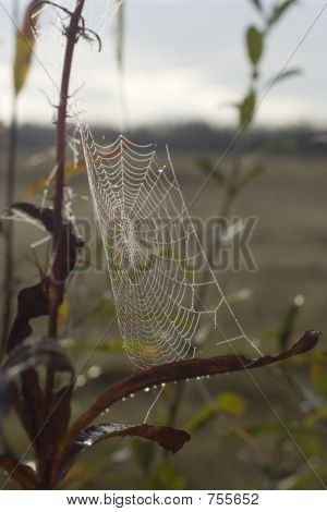 Early Morning Dew On Spider Web