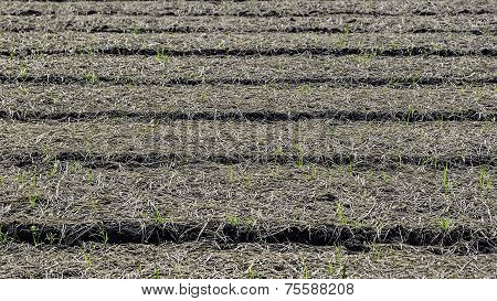 Cultivated Plots