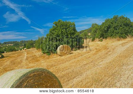 Field With Hay Bales