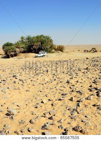 Safari In The Desert, Sahara