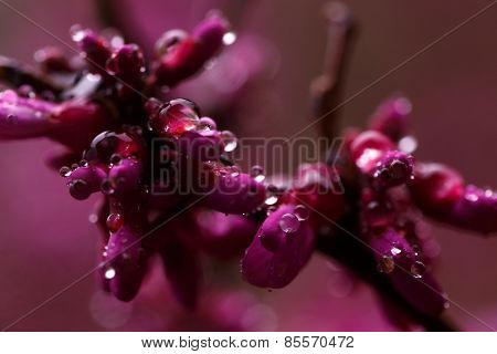 Raindrops On Branch With Pink Flowers