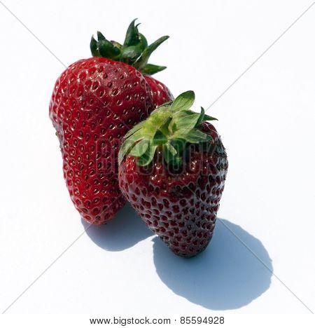 Strawbuddies