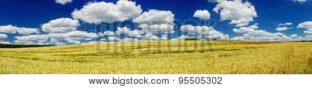 Yellow Field Of Wheat And Blue Sky.