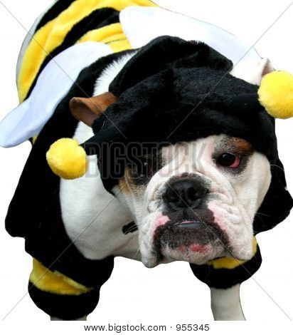Bumble Bee Bulldog