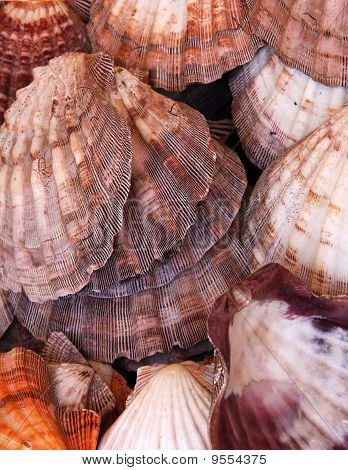 Close up of the large group of empty seashells poster