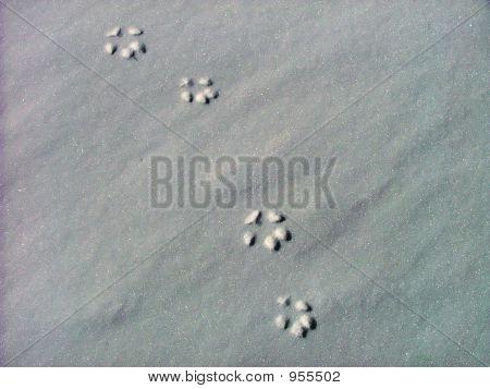 Lynx Track