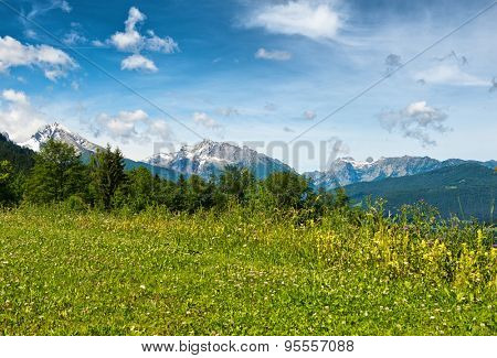 Edge of wild grassy meadow with fir trees and snow-capped mountains in backdrop beneath blue sky and whispy white clouds