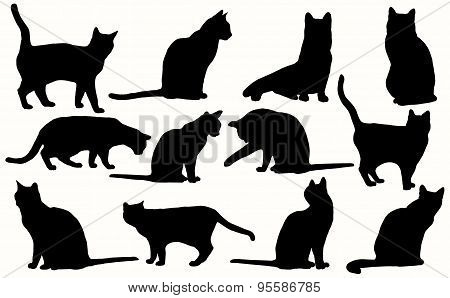 Vector cats silhouette isolated on a white background