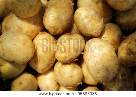 Crop of new potatoes, closeup