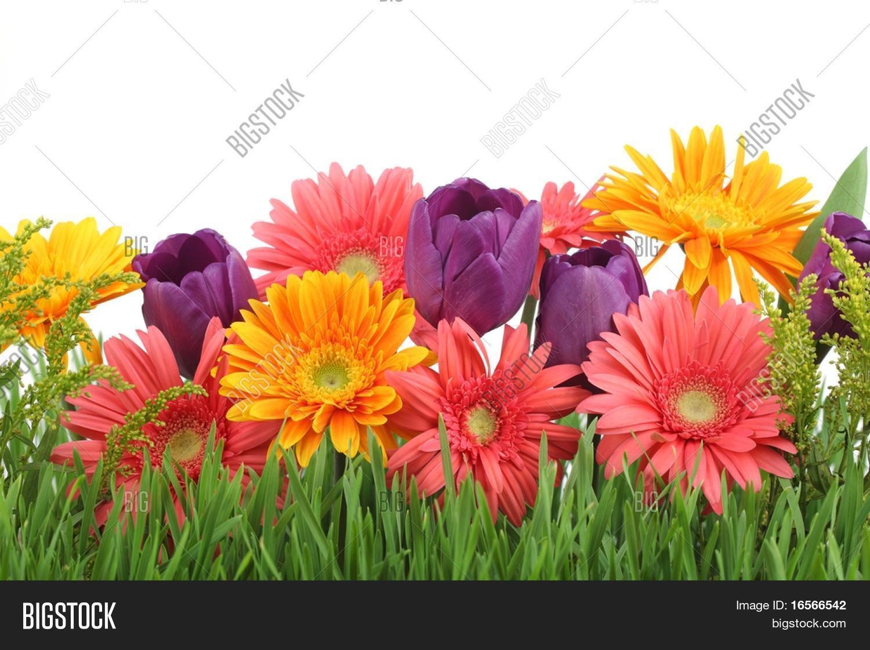 Spring Flowers Image Photo Free Trial Bigstock