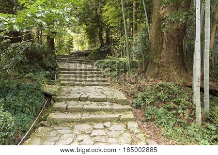 Stone steps (Daimonzaka, Kumano Kodo) surrounded by forest in Wakayama, Japan