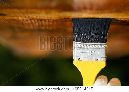 Paintbrush sliding over wooden ceiling surface protecting wood for influences weathering insects and fungus. Carpentry woodwork home improvement do-it-yourself concept with copy space.