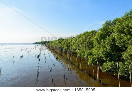 Mangrove forest at tropical beach with blue sky