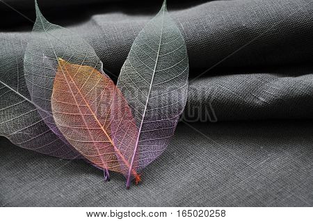 Close up skeleton leaves put in heart shape with gray background