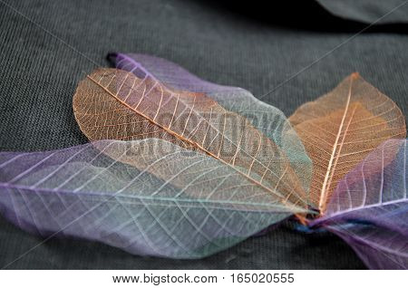 Close up texture of colorful skeleton leaves