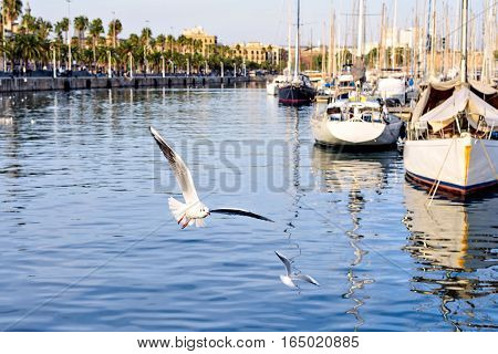 Port Vell at Sunset. Rambla de Mar. Boats, yachts, palm trees and seagulls. Beautiful peaceful view Barcelona, Spain