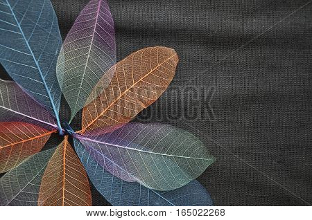 Colorful skeleton leaves in blooming flower shape on gray background