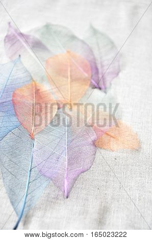 Colorful skeleton leaves on background point to you