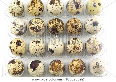 Many mottle quail eggs in plastic packaging cells  isolated closeup